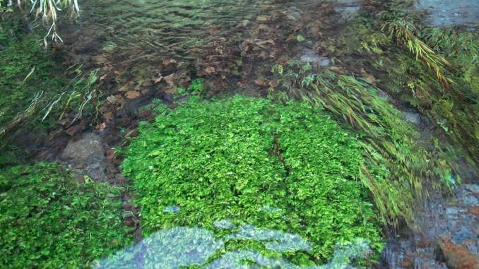 地蔵滝の泉